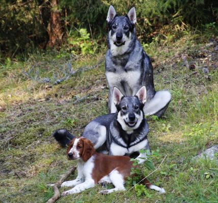 Birka, Enja och Lovis poserar i den rekordvarma sommaren