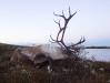 vildren2007-010