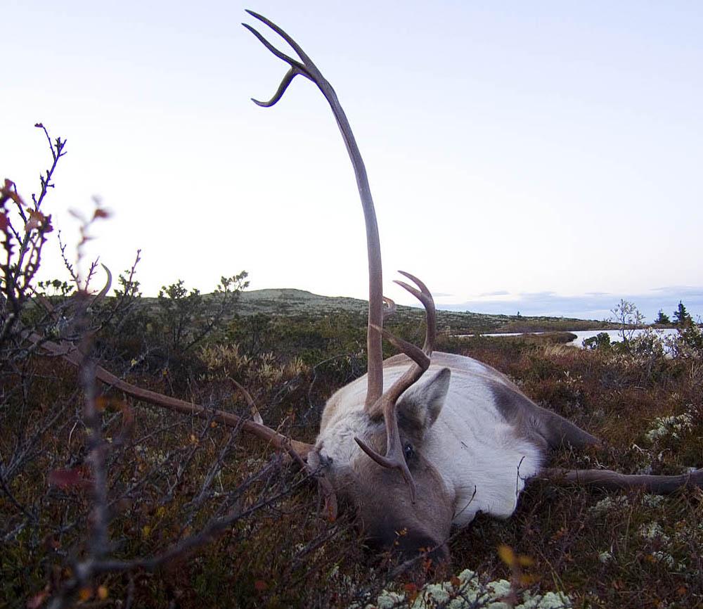 vildren2007-009