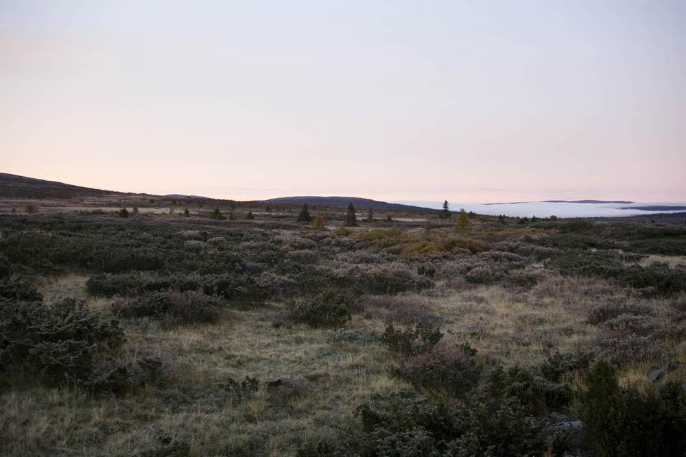 vildren2007-018
